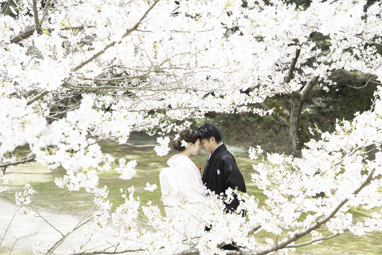 栗林/桜/フォトウエディング